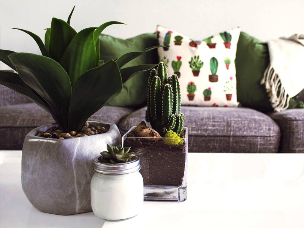 L'action des plantes d'intérieur pour notre santé et bien-être