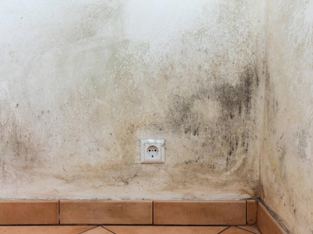 Et si l'humidité des murs venaient d'en bas ?