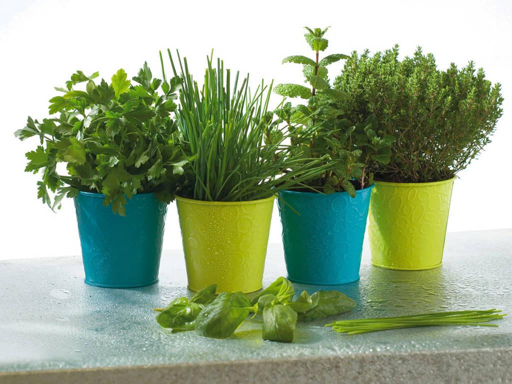 plantes aromatiques à côté de la cuisine